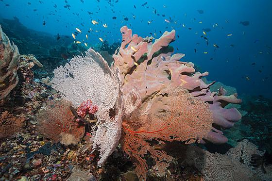 Artenreiches Korallenriff / Coral Reef Scenery