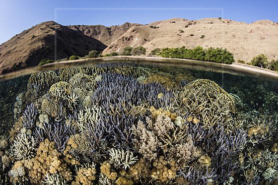 Artenreiches Riffdach / Various Corals growing on Reef Top