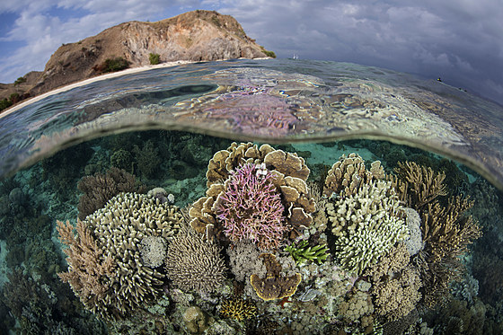 Artenreiches Riffdach / Various Corals growing on Reef Top