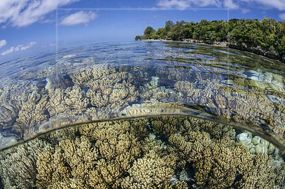 Weichkorallen auf Riffdach / Soft Coral growing on Reef Top / Litophyton sp.