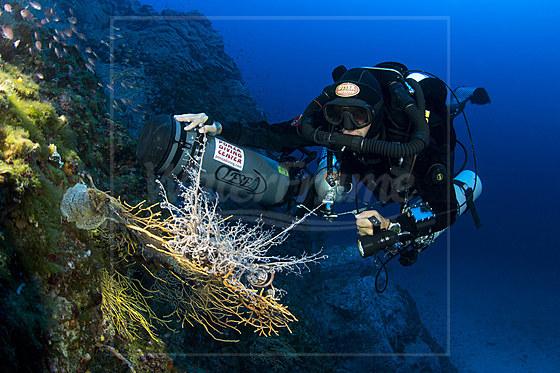 Gorgonenhaupt und Rebreather-Taucher / Basket Star and Rebreather Diver / Astrospartus mediterraneus