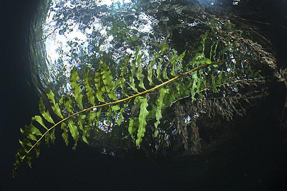 Cenote Angelita / Angelita Cenote