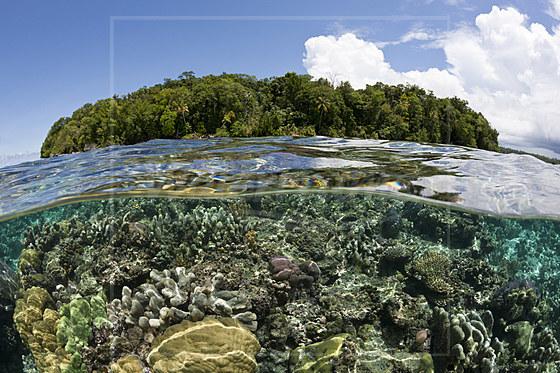 Riffdach mit Korallen / Corals on Reef Top