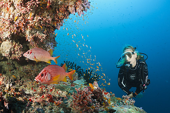 Taucher am Riff / Scuba Diver on Coral Reef