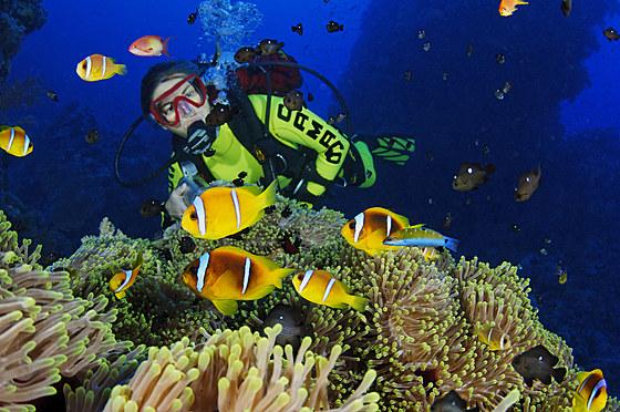 Rotmeer-Anemonenfische und Taucher / Red Sea Anemonefish and scuba diver / Amphiprion bicinctus